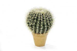 Cactus Barrel 34cm