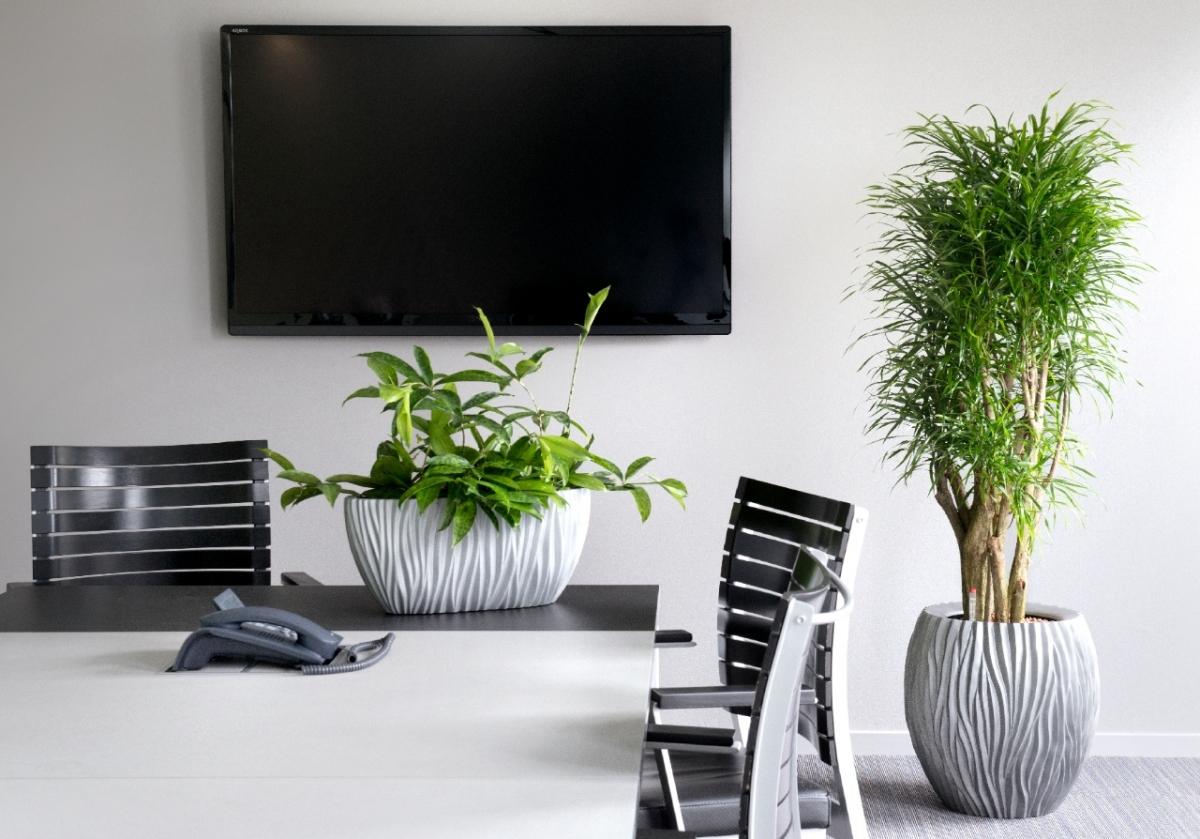 kantoor-planten
